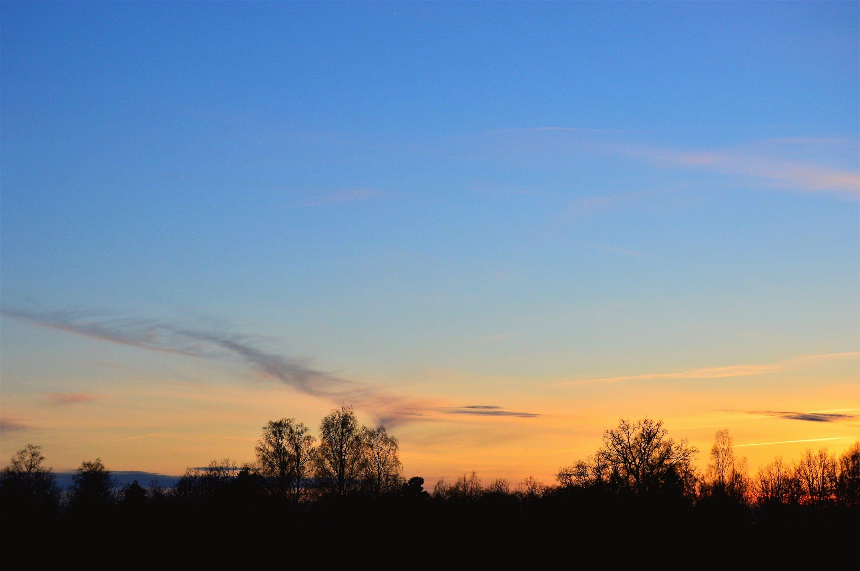 Free stock photo of blue sky, Bredasten, evening, forest