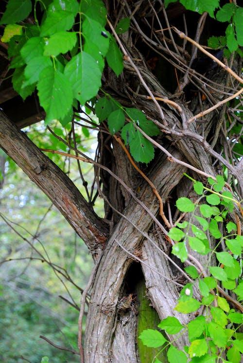 Free stock photo of bark, green, nature