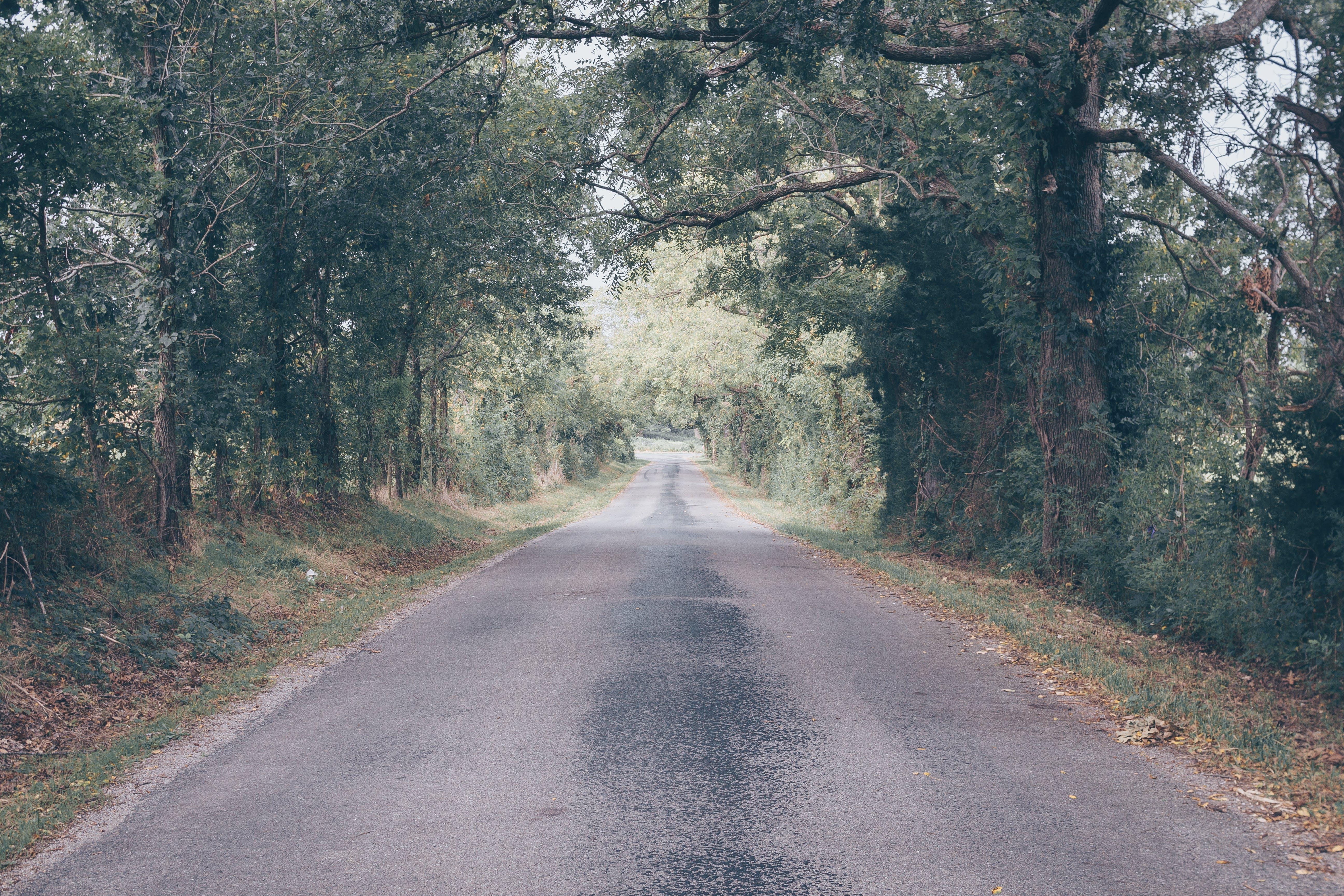 Gratis lagerfoto af asfalt, fortov, gade, græs