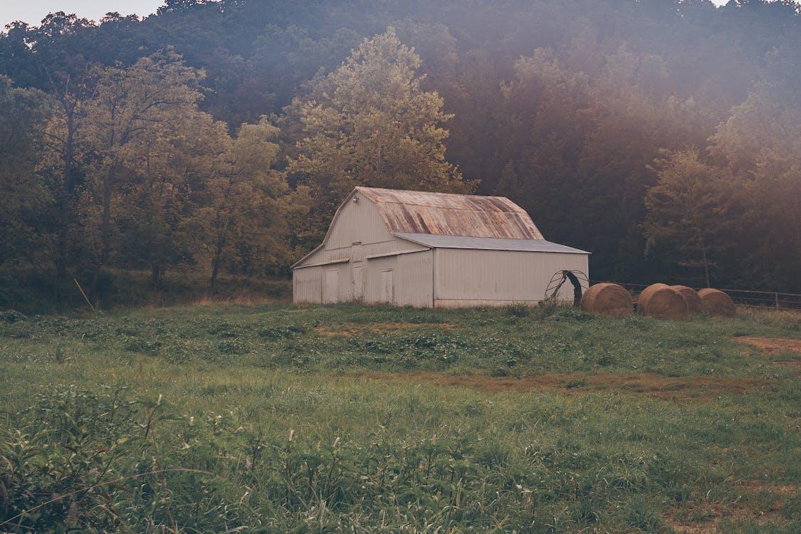 akkerland, boerderij, bomen