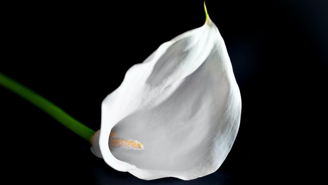 белый, красивые цветы, красивый