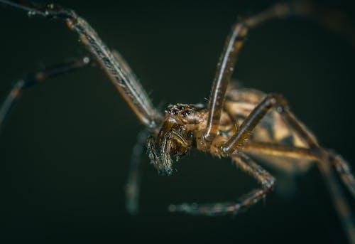 Ilmainen kuvapankkikuva tunnisteilla aavemainen, eläin, hämähäkki, hämähäkkieläin