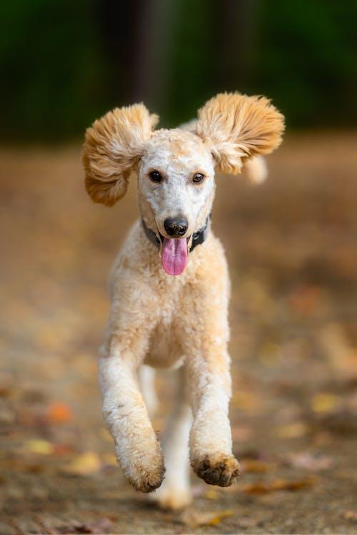 Shaggy Dog Running in Autumn Weather