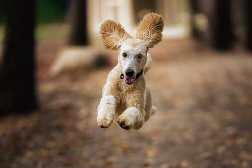 Shaggy Dog Running in Autumn Wood