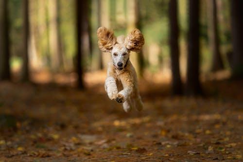 Shaggy Dog Running in Autumn Woods