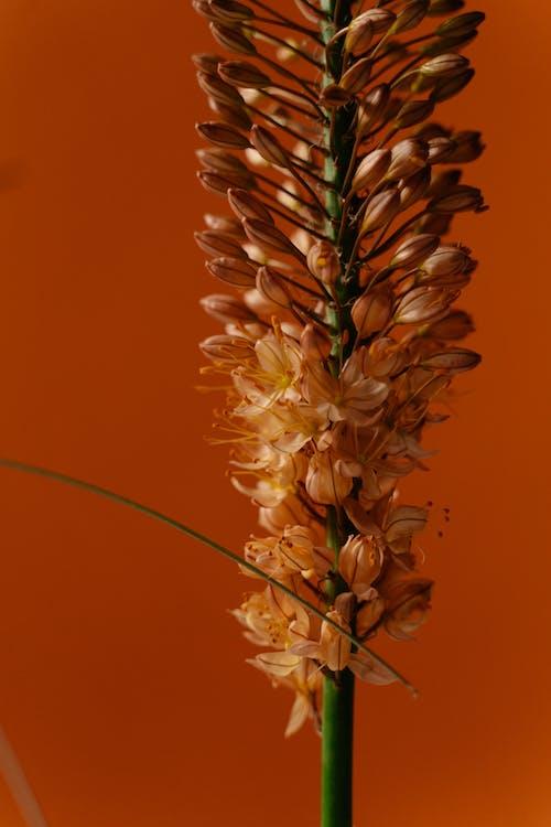 Immagine gratuita di buccia, cactus, colorato
