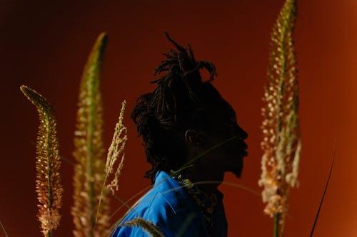 Immagine gratuita di agricoltura, azienda agricola, cereale