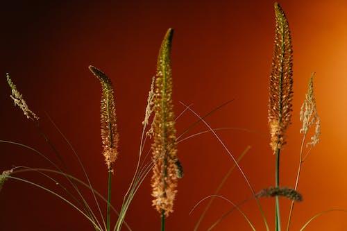 Immagine gratuita di agricoltura, alba, buccia