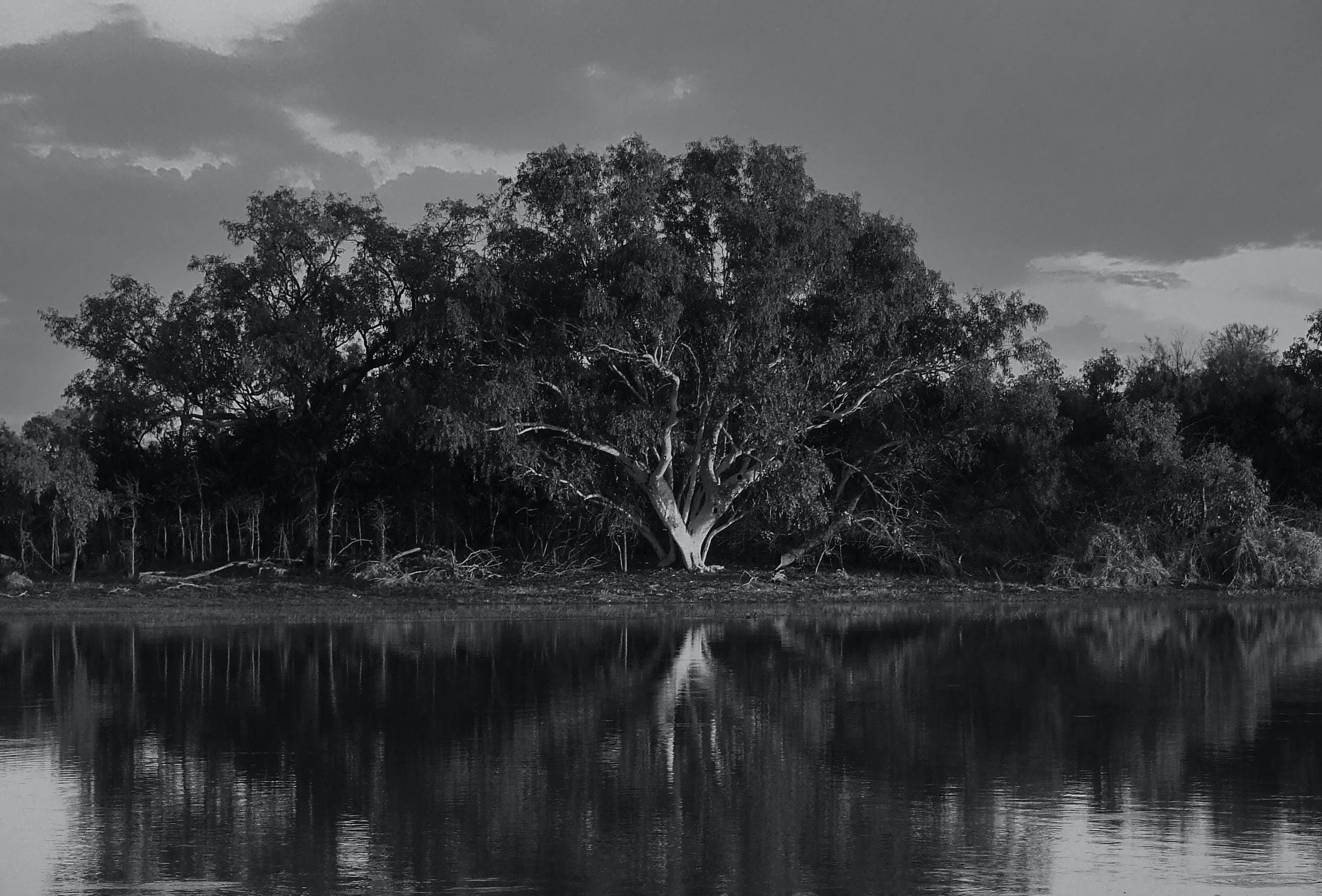 Free stock photo of black&white, lanscape, tree