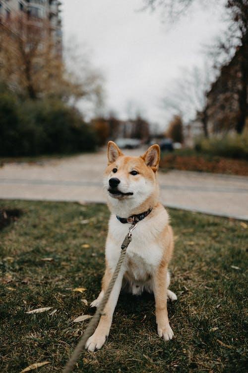 가을, 강아지, 개의 무료 스톡 사진