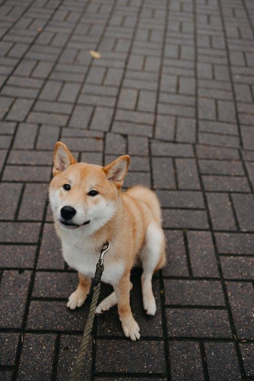강아지, 개, 개의의 무료 스톡 사진