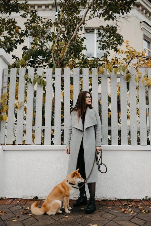 가을, 개, 개 산책의 무료 스톡 사진
