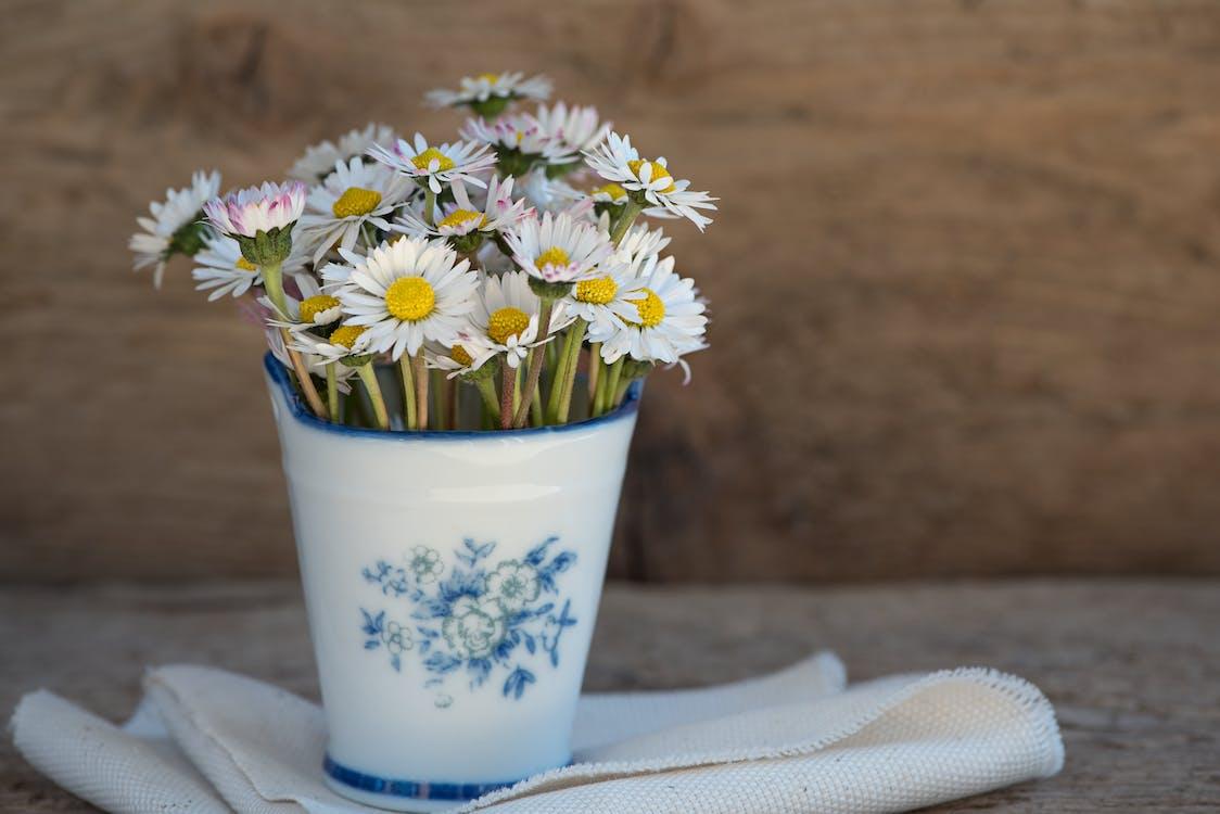 꽃, 꽃병, 데이지
