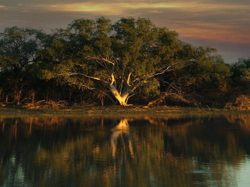 Free stock photo of billabong, northern territory, waterhole