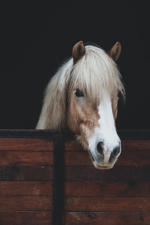 White Horse on Brown Wooden Fence