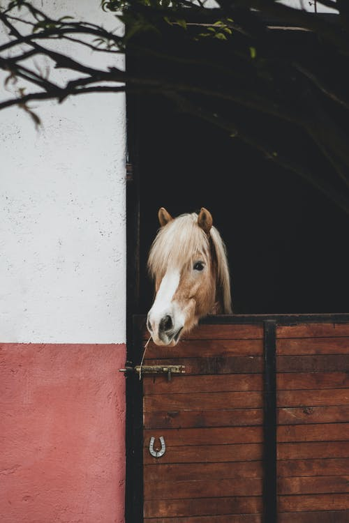 Brown Horse in White and Red Wooden Cage