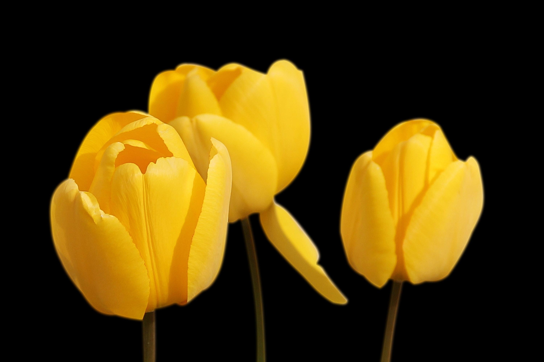 Yellow flower free stock photo free download mightylinksfo Gallery
