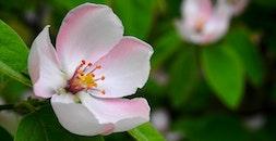 nature, spring, flower