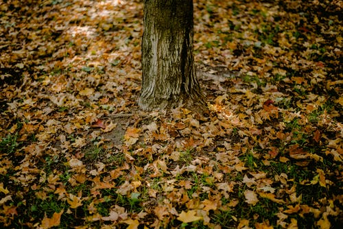 Immagine gratuita di albero, autunno, caduto