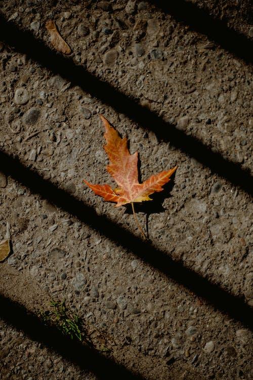 Foto stok gratis bayangan, daun, di luar rumah