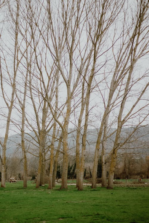 Leafless Trees on Brown Field