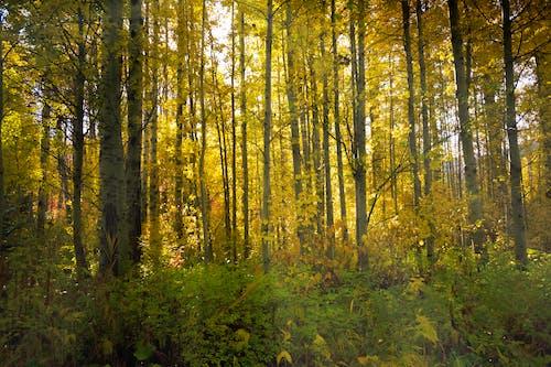 Gratis arkivbilde med årstid, atmosfera de outono, blad