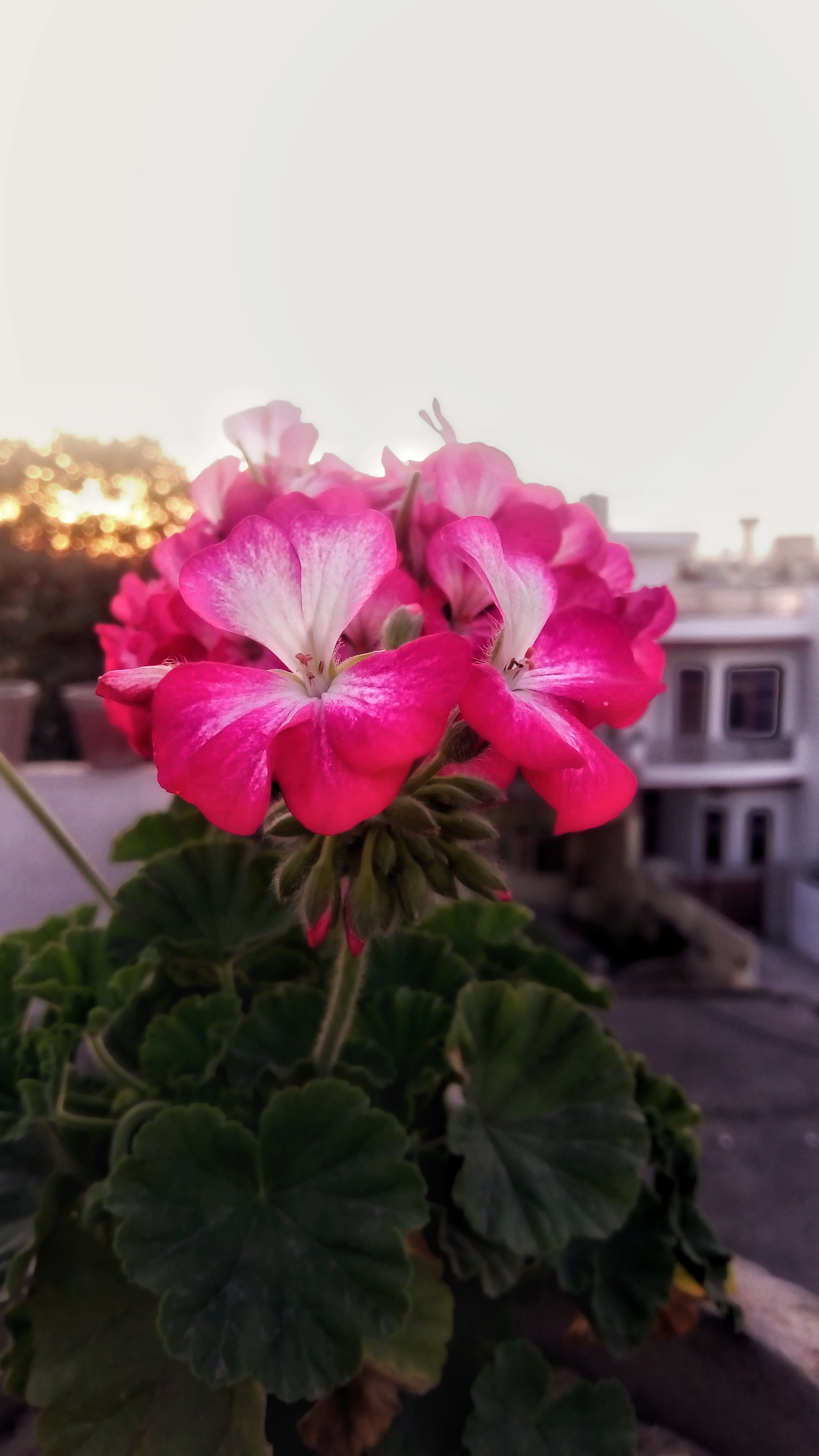 krásné květiny