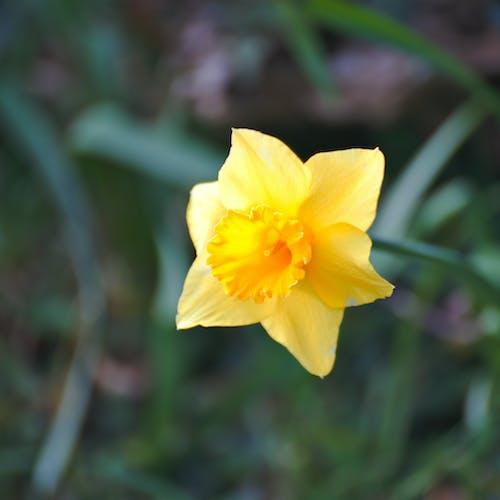 Darmowe zdjęcie z galerii z beautã ©, botanique, fleur, flora