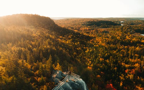 An Aerial Shot of a Woods in Autumn Colors