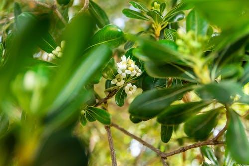Безкоштовне стокове фото на тему «квітка, квітучий, Природа»
