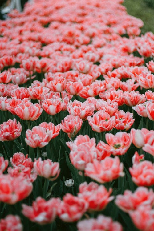Бесплатное стоковое фото с белый, головка цветка, изобилие