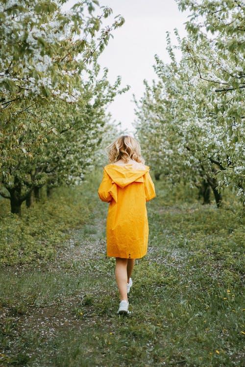 Foto d'estoc gratuïta de abric, arbres, cabell ondulat