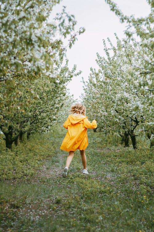 Foto stok gratis alam, berjalan, daya hidup