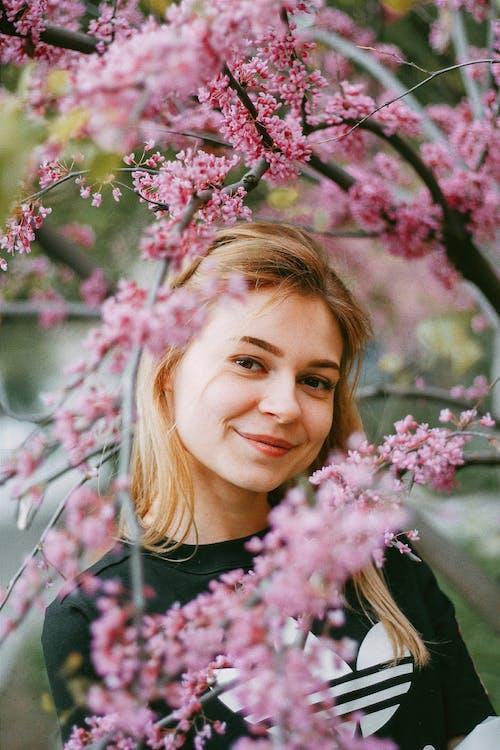 Gratis stockfoto met bloeiend, bloemen, bloesem