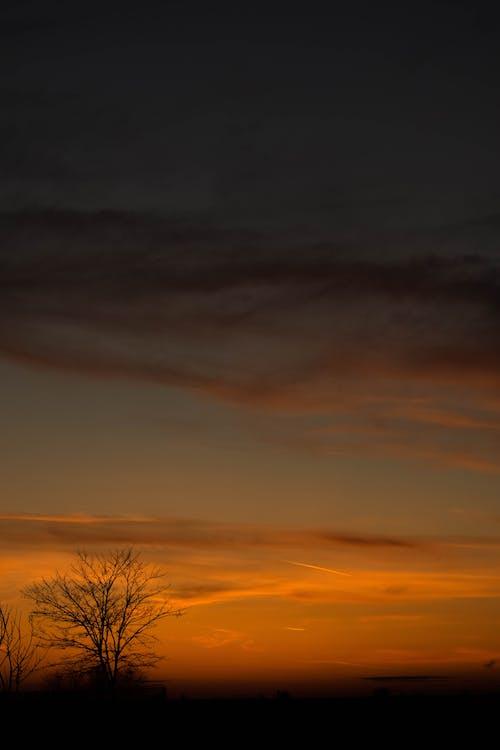 arbre mort, charmant, ciel