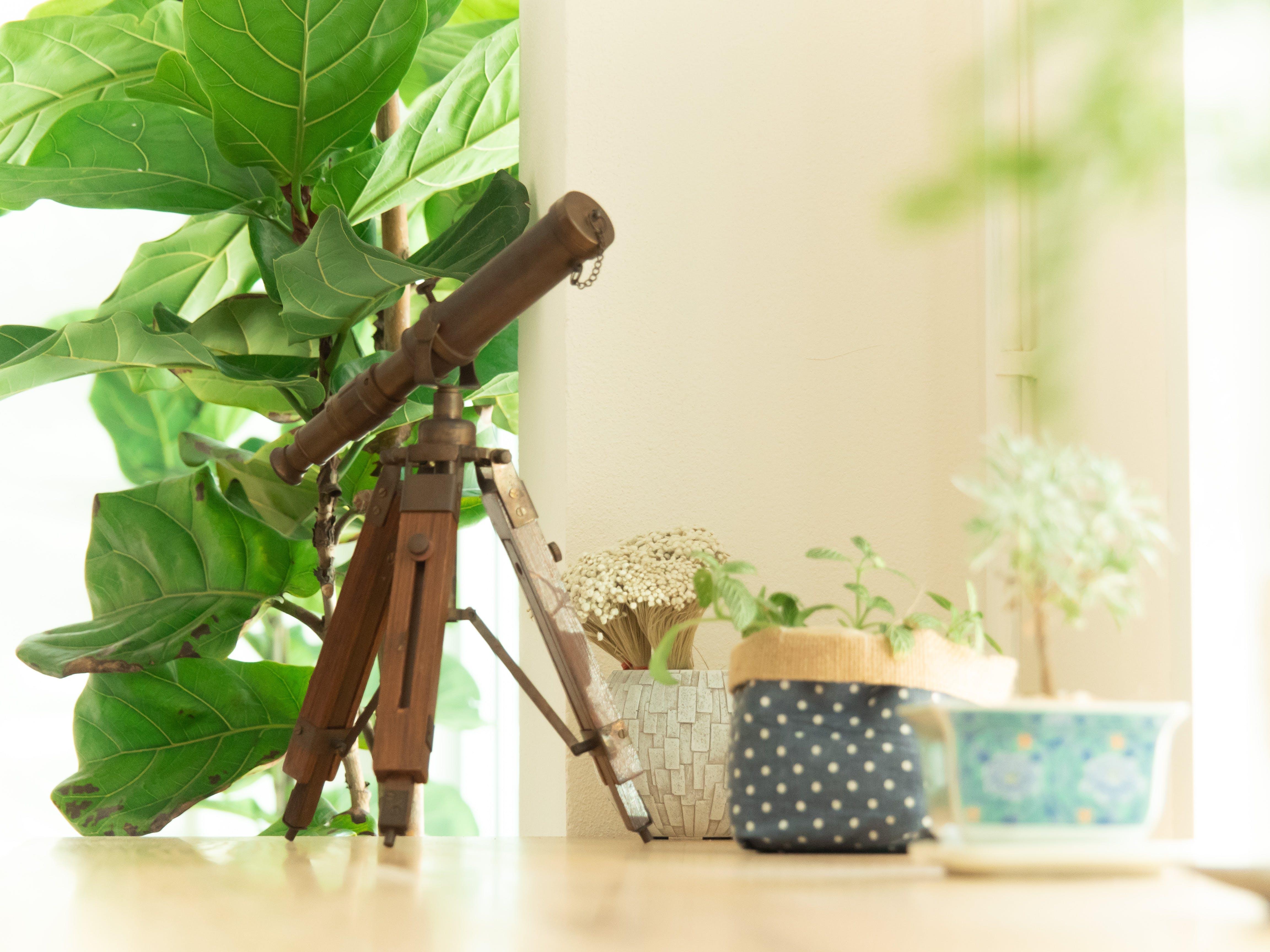 Free stock photo of comfort, plant, plant box, telescope