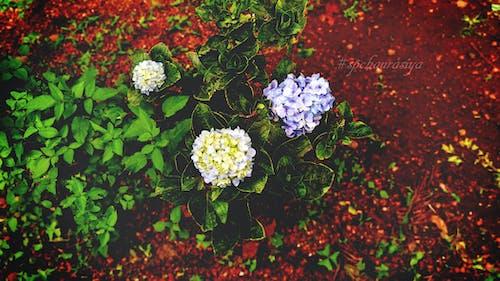 Gratis arkivbilde med blå, blå blomst, blomster, bunt