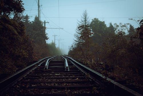 Immagine gratuita di albero, allenare, ferrovia