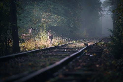 Immagine gratuita di alba, albero, autunno