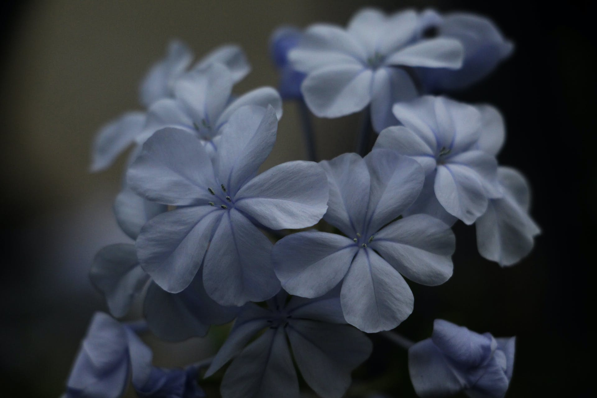 Free stock photo of flowers, white flowers, beautiful flowers