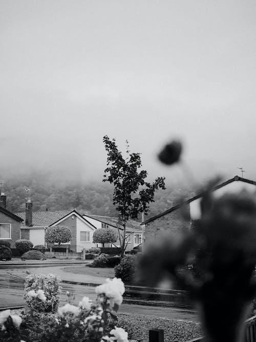 Free stock photo of foggy, houses, neighborhood