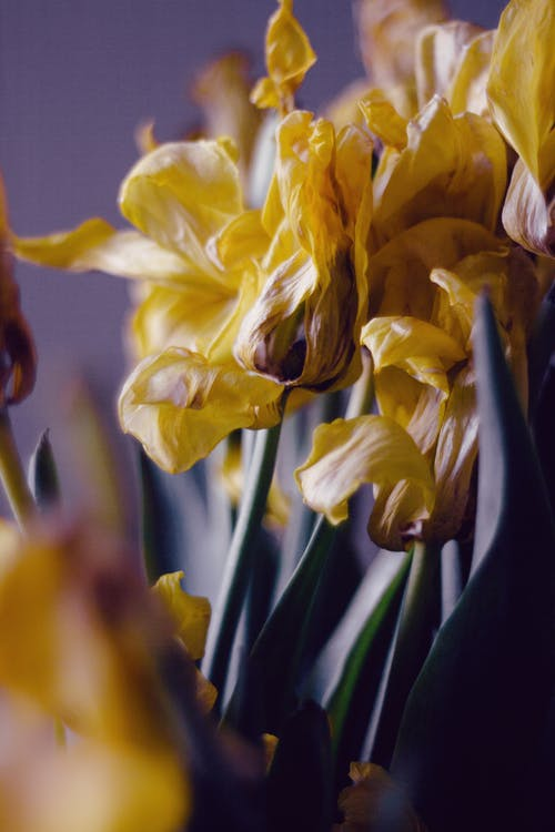A Closeup on Dried Flowers