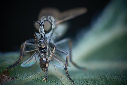 Gratis stockfoto met beest, blad, bromvlieg