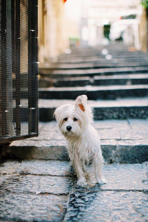 Kostenloses Stock Foto zu draußen, haustier, hund