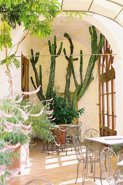 Imagine de stoc gratuită din cactus, cafenea, cantină