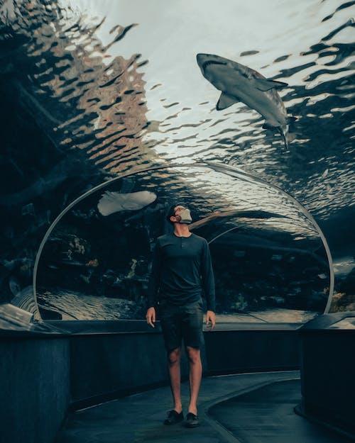 Foto d'estoc gratuïta de adult, aigua, aquari