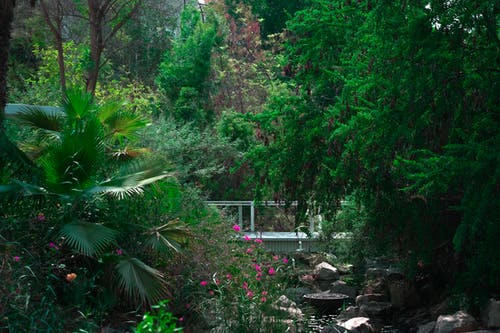 Fotos de stock gratuitas de agua, árbol, arbusto