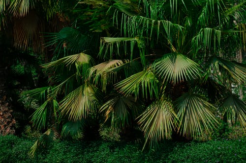 Fotos de stock gratuitas de al aire libre, árbol, coco