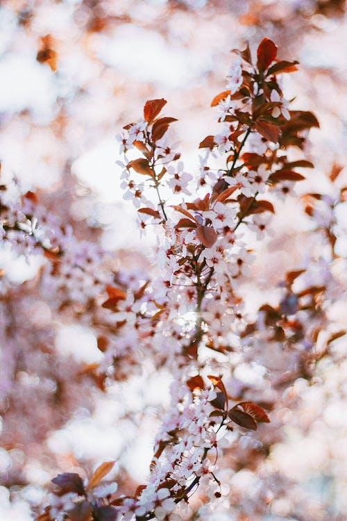 Ilmainen kuvapankkikuva tunnisteilla kalpea, koristeellinen, kukat