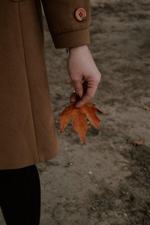 Ingyenes stockfotó barna, évszak, gomb témában